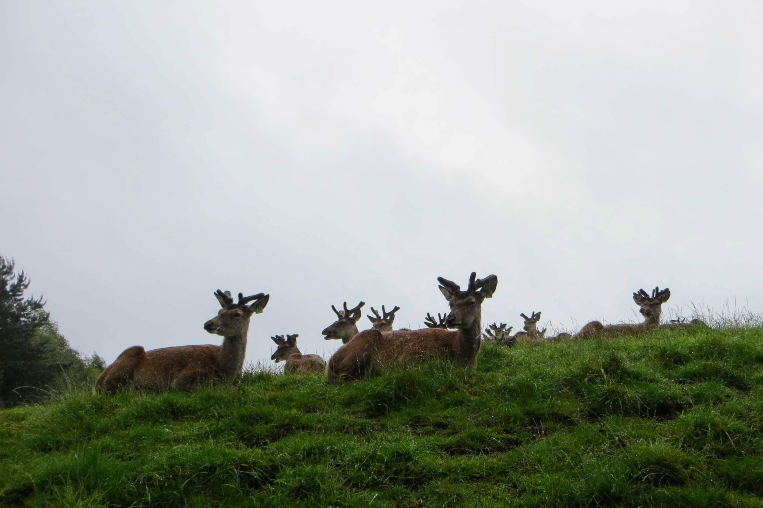 Family-friendly Holidays in Scotland - Deer